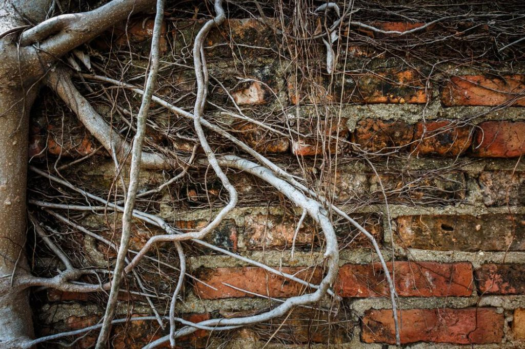 college-station-foundation-repair-experts-root-barriers-2_orig